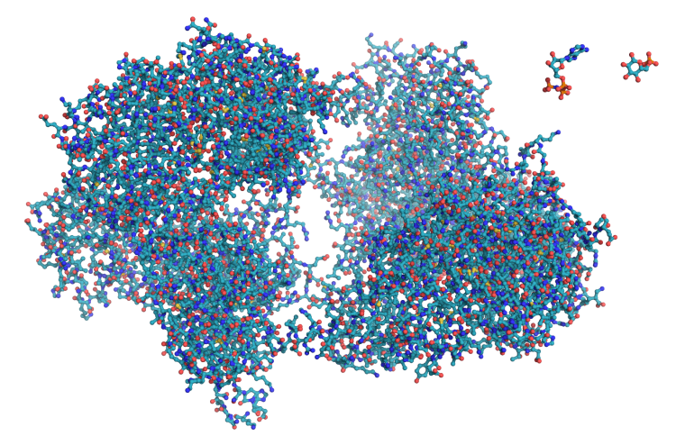 Hexokinase_ball_and_stick_model,_with_substrates_to_scale_copy